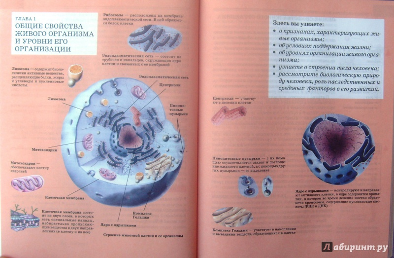 турун тун биология любимова 8 класс онлайн большинства