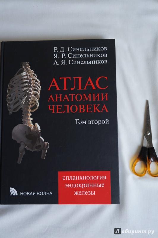 Иллюстрация 5 из 20 для атлас анатомии человека. Учебное пособие.