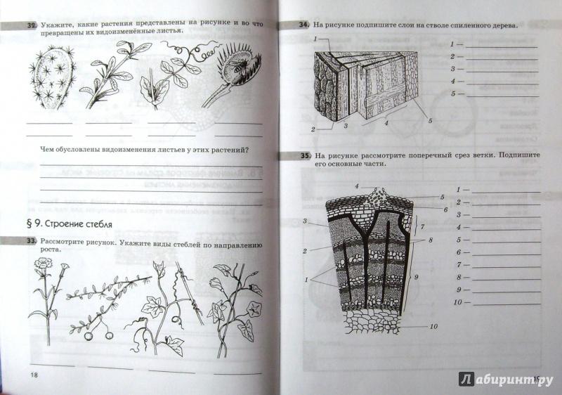 биология 6 класс рабочая тетрадь покрытосеменные