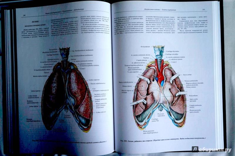 Иллюстрация 2 из 20 для атлас анатомии человека. Учебное пособие.