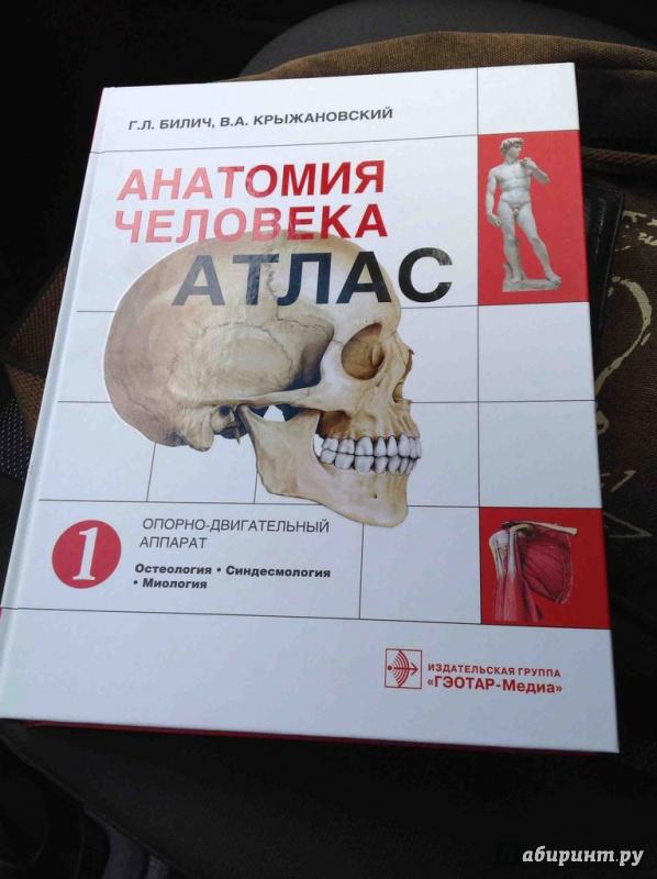 доставка атлас билича по анатомии 1 том купить спб оригинальных