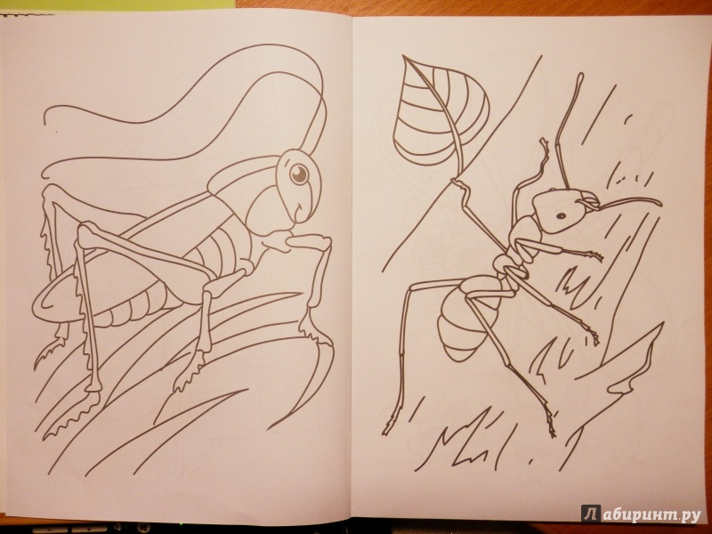 Иллюстрация 1 из 41 для Суперраскраска. Животные | Лабиринт - книги. Источник: Грашина  Варвара Анатольевна