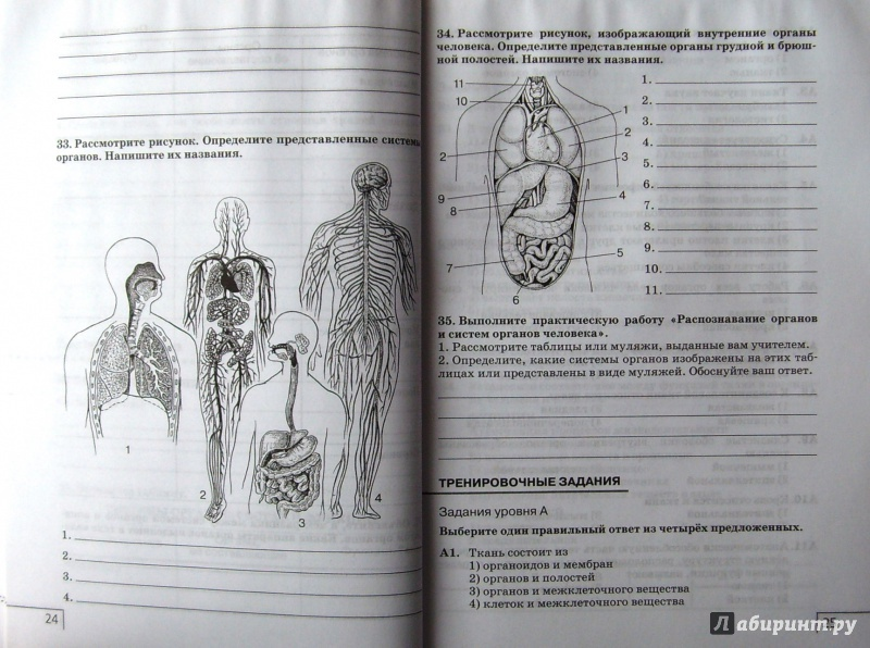 8 сонин сапин гдз к учебнику класс биология