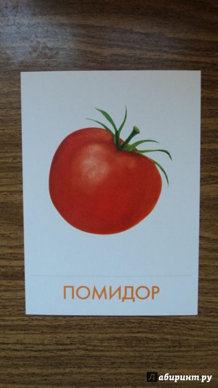 Иллюстрация 1 из 7 для Дидактические карточки. Овощи | Лабиринт - книги. Источник: Василенко  Наталья Александровна
