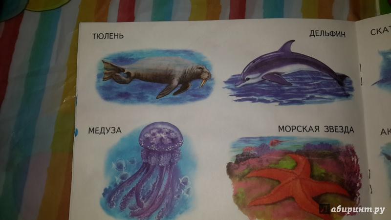 Иллюстрация 1 из 16 для Морские животные   Лабиринт - книги. Источник: Анна Герасименко