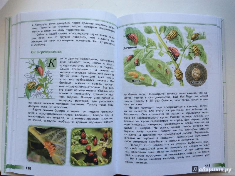 книга зеленые страницы рассказ беляк и русак читать