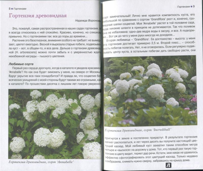Гортензии виды и сорта для российских садов фото