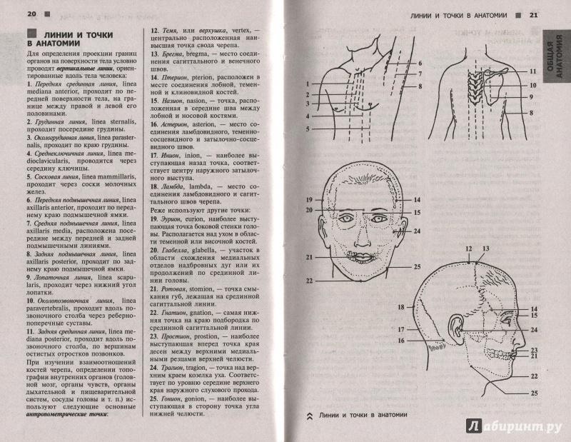 Иллюстрация 1 из 20 для Справочный атлас анатомии человека (На основе Международной анатомической терминологии) - Рудольф Самусев | Лабиринт - книги. Источник: Andrey29