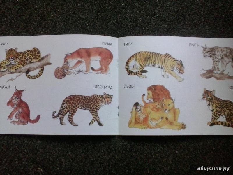 Иллюстрация 1 из 18 для Дикие кошки | Лабиринт - книги. Источник: Ахмадулин  Рустам