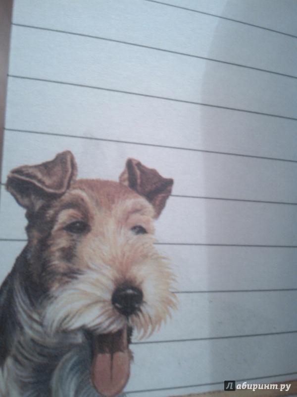 Иллюстрация 10 из 16 для Блокнот. Собаки А6   Лабиринт - канцтовы. Источник: Грицук  Вероника