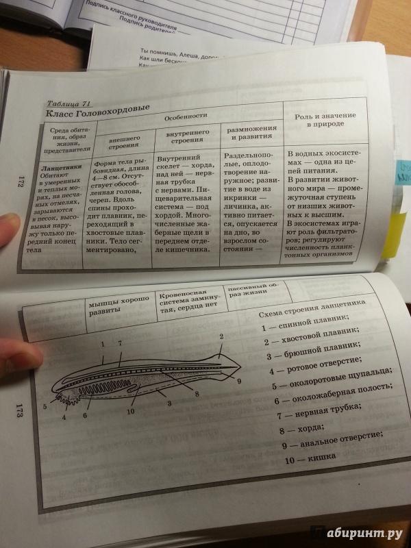 Биология в таблицах схемах и рисунках заяц фото 834