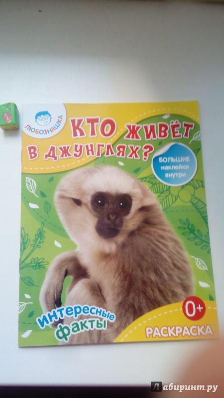 Иллюстрация 1 из 3 для Кто живет в джунглях?  Раскраска + большие наклейки внутри | Лабиринт - книги. Источник: Косова  мария
