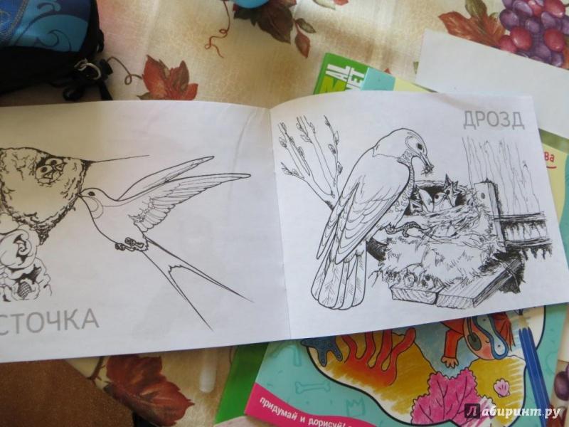 Иллюстрация 1 из 23 для Перелетные птицы | Лабиринт - книги. Источник: Ko-ren