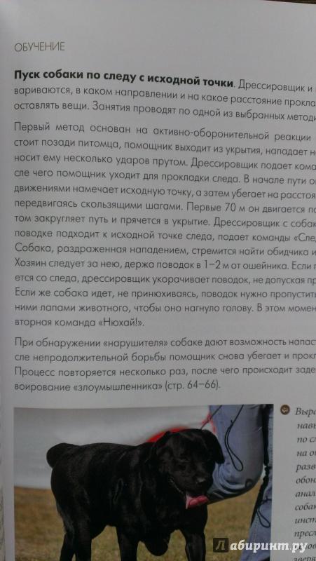 Иллюстрация 11 из 13 для Все о дрессировке собак - Арсений Нестеров | Лабиринт - книги. Источник: Подмосковная панда