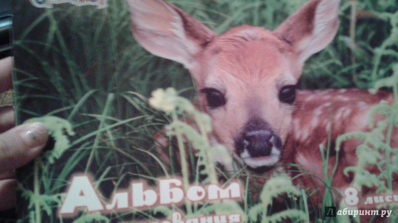"""Иллюстрация 1 из 7 для Альбом для рисования, 8 листов """"Детеныши животных"""" (911132-14)   Лабиринт - канцтовы. Источник: Написатель"""