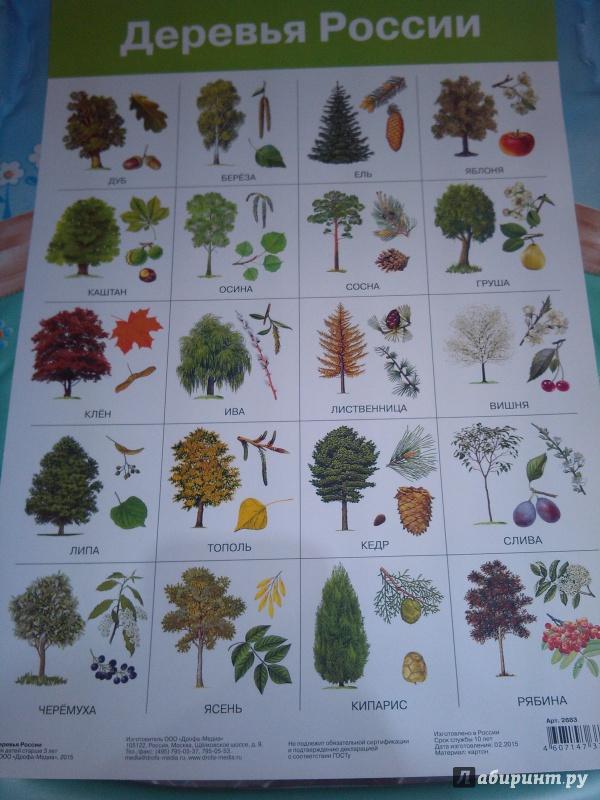 Листья деревьев и кустарников фото