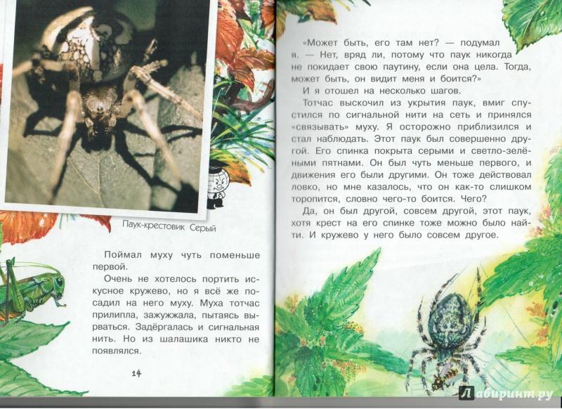 Иллюстрация 10 из 23 для Кто развесил в лесу кружева? - Юрий Аракчеев | Лабиринт - книги. Источник: Книжный кот