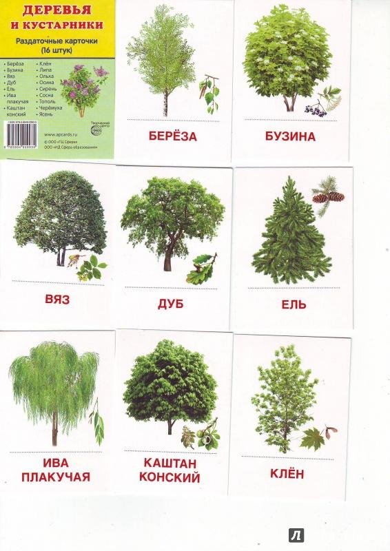 картинки деревья и кустарники для детей