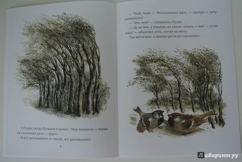 Картинки паустовский корзина с еловыми шишками