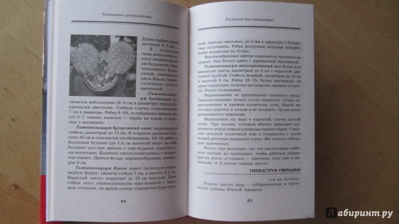 Иллюстрация 1 из 21 для Комнатное цветоводство для лентяек - Елена Жадько | Лабиринт - книги. Источник: Данилова  Мария Александровна