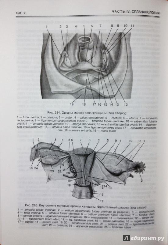 Гайворонский и. В. , ничипорук г. И. , гайворонский а. И. Анатомия и.