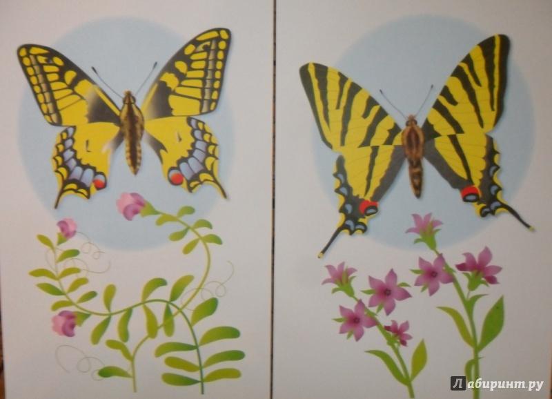 Иллюстрация 18 из 34 для Бабочки. Дидактический материал - Татьяна Куликовская | Лабиринт - книги. Источник: Наталья
