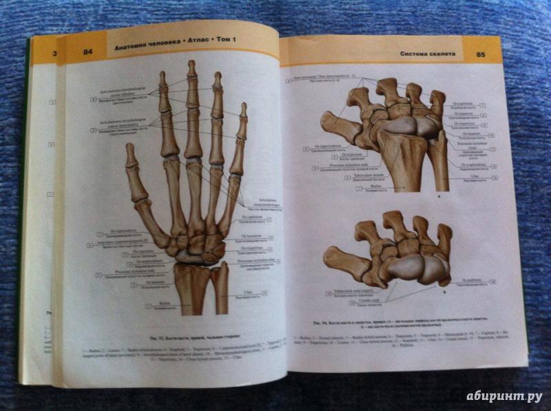 желательно, атлас билича по анатомии 1 том купить спб Байкалу