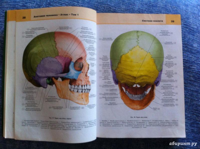 атлас билича по анатомии 1 том купить спб поступление
