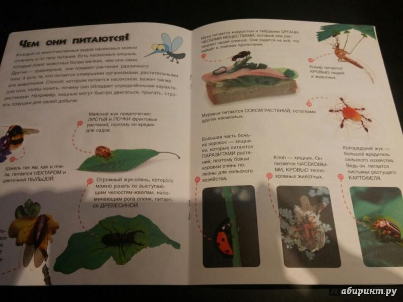 Иллюстрация 12 из 22 для Удивительные насекомые. Энциклопедия животных с наклейками | Лабиринт - книги. Источник: Сафонова  Полина