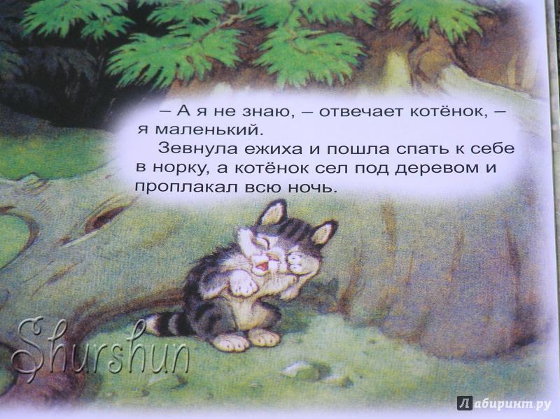 Иллюстрация 18 из 48 для Упрямый котёнок - Иван Белышев | Лабиринт - книги. Источник: Shurshun