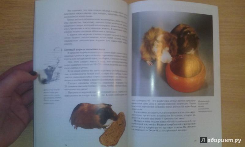 Иллюстрация 13 из 18 для Морские свинки. Содержание и уход - Дитрих Альтман | Лабиринт - книги. Источник: Александра Джейлани