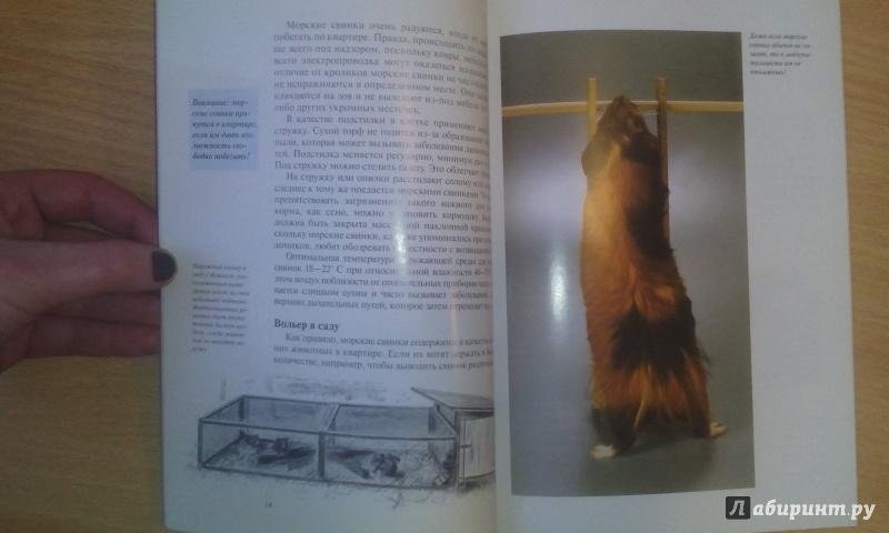 Иллюстрация 8 из 18 для Морские свинки. Содержание и уход - Дитрих Альтман | Лабиринт - книги. Источник: Александра Джейлани