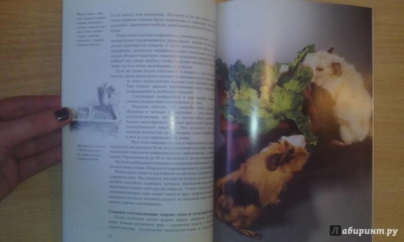 Иллюстрация 11 из 18 для Морские свинки. Содержание и уход - Дитрих Альтман | Лабиринт - книги. Источник: Александра Джейлани