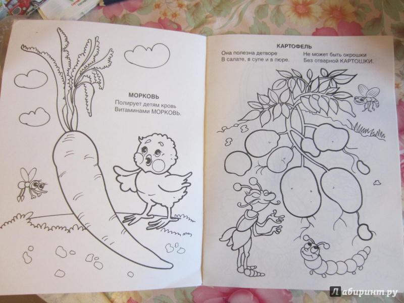 Иллюстрация 1 из 5 для Овощи и фрукты - Юрий Чичев | Лабиринт - книги. Источник: Лабиринт