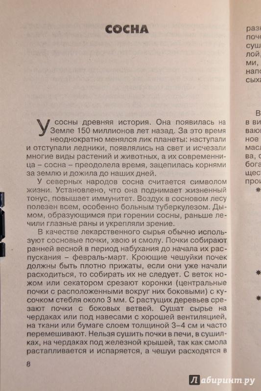Иллюстрация 1 из 13 для Лечение хвойными растениями - Владимир Баженов | Лабиринт - книги. Источник: С  Т
