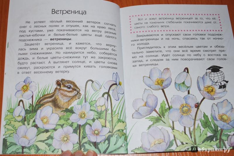Анатолий Онегов  Что растёт на лесной поляне скачать fb2