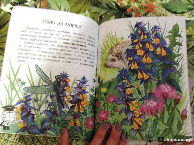 Книга Онегов Анатолий Сергеевич Что растёт на лесной