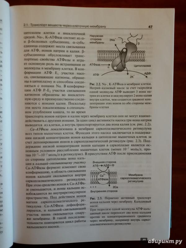 skazke-gofmana-avtori-uchebnik-po-normalnaya-fiziologiya-tkachenko