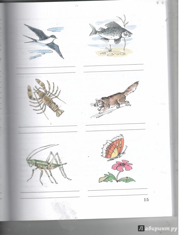 Иллюстрация 1 из 6 для Русский язык 5-9 классы. Рабочая тетрадь 4. Глагол. Адаптированные программы - Галунчикова, Якубовская | Лабиринт - книги. Источник: Никед