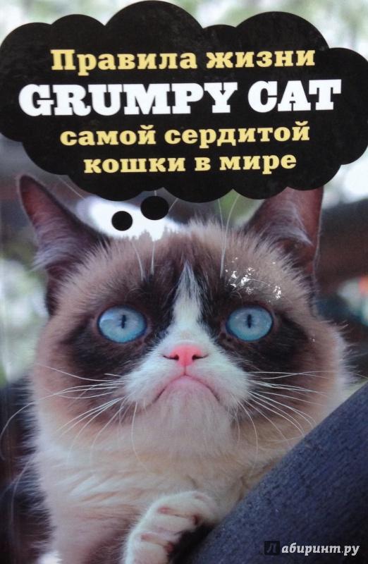 Иллюстрация 1 из 12 для Grumpy Cat. Правила жизни самой сердитой кошки в мире | Лабиринт - книги. Источник: Tatiana Sheehan