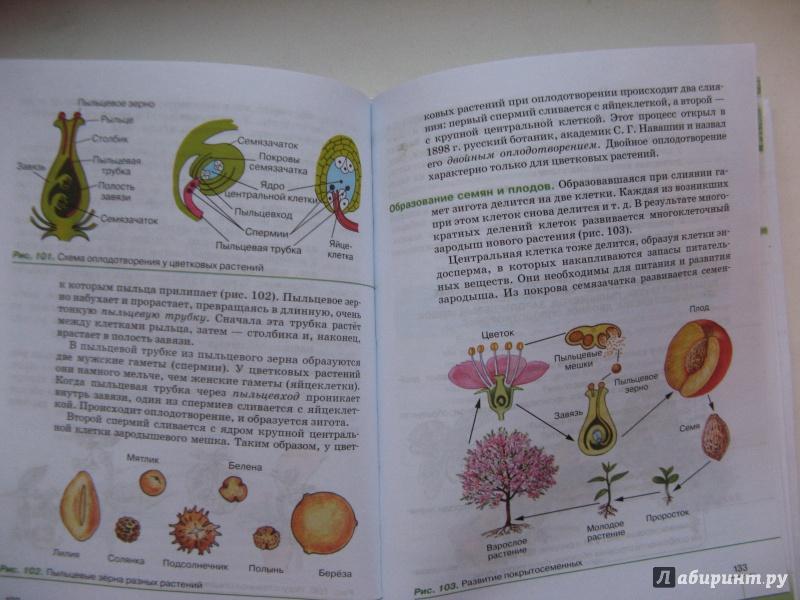 Гдз По Биологии 6 Класс Пасечник Учебник 2019 Дрофа