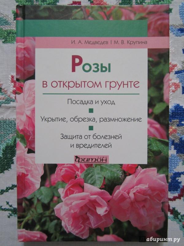 Иллюстрация 1 из 11 для Розы в открытом грунте - Медведев, Крупина | Лабиринт - книги. Источник: A. Fragaria