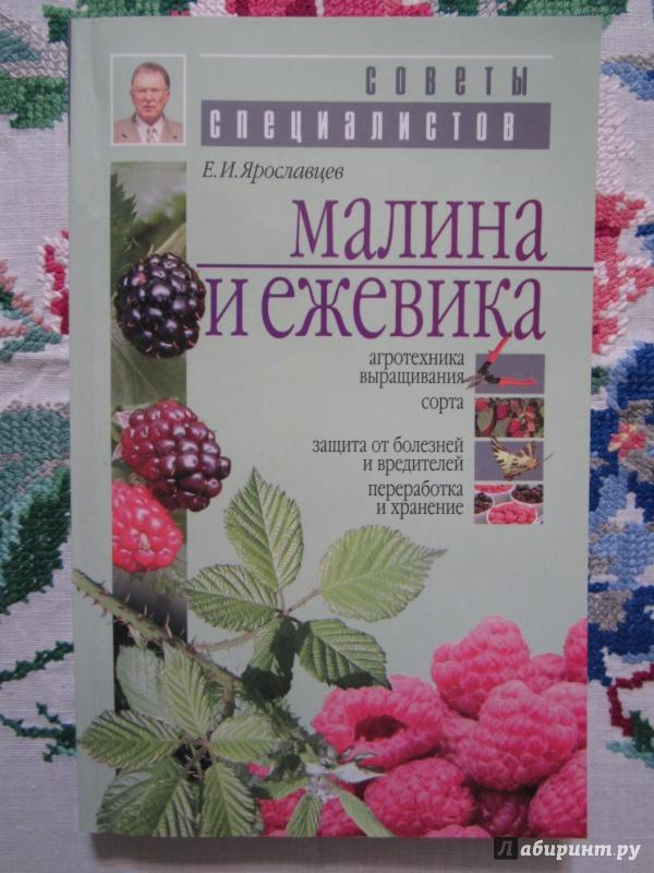 Иллюстрация 1 из 22 для Малина и ежевика - Евгений Ярославцев | Лабиринт - книги. Источник: A. Fragaria