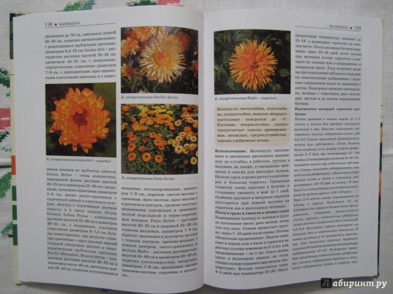 Иллюстрация 14 из 28 для Однолетние и многолетние декоративные растения. Иллюстрированный атлас - Дина Кудрявец   Лабиринт - книги. Источник: A. Fragaria