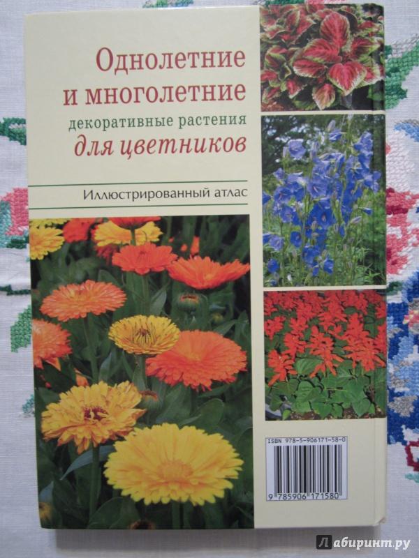 Иллюстрация 3 из 28 для Однолетние и многолетние декоративные растения. Иллюстрированный атлас - Дина Кудрявец | Лабиринт - книги. Источник: A. Fragaria