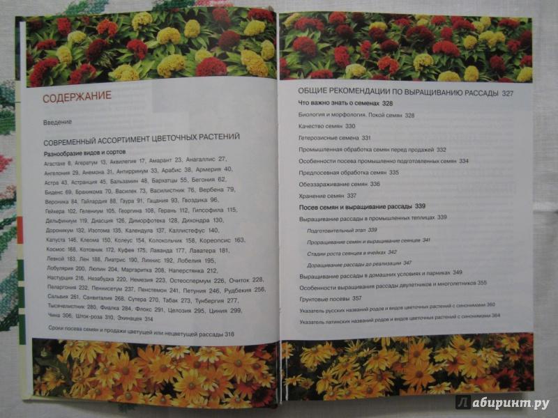 Иллюстрация 5 из 28 для Однолетние и многолетние декоративные растения. Иллюстрированный атлас - Дина Кудрявец | Лабиринт - книги. Источник: A. Fragaria