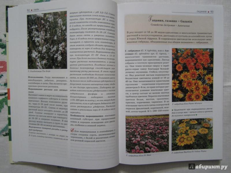 Иллюстрация 10 из 28 для Однолетние и многолетние декоративные растения. Иллюстрированный атлас - Дина Кудрявец   Лабиринт - книги. Источник: A. Fragaria