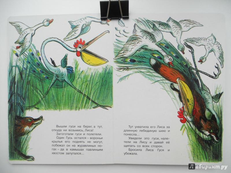 Иллюстрация 1 из 4 для Это что за птица? - Владимир Сутеев | Лабиринт - книги. Источник: Шатикова  Ирина
