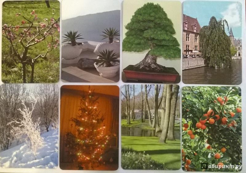 Иллюстрация 1 из 5 для Дерево как образ человека - Кац, Мухаматулина | Лабиринт - книги. Источник: Калюжная  Оксана