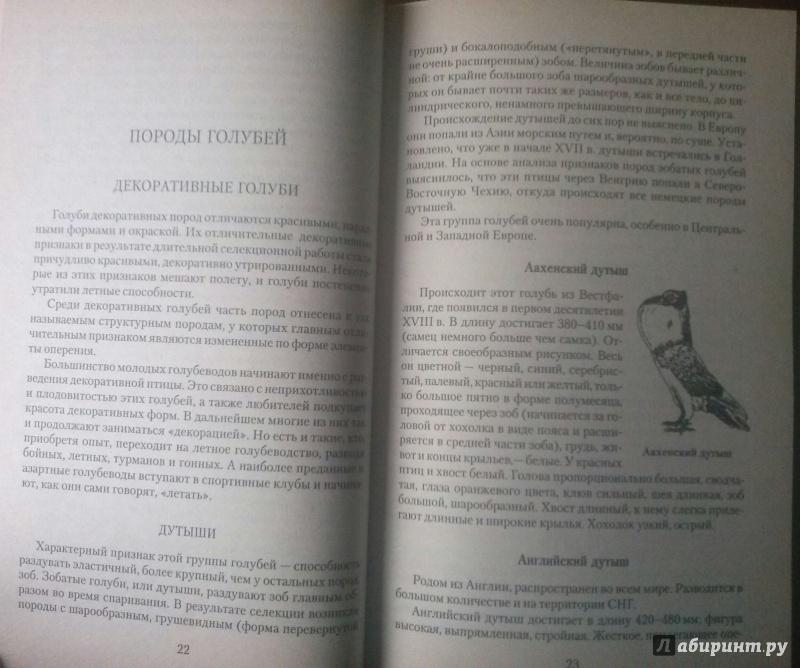 Иллюстрация 4 из 7 для Декоративное и мясное голубеводство - Винюков, Винюков | Лабиринт - книги. Источник: SiB